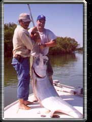 This tarpon was estimated at over 150 pounds.
